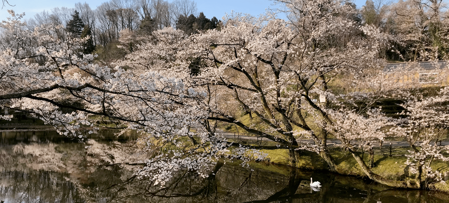 A different spring in Japan than imagined